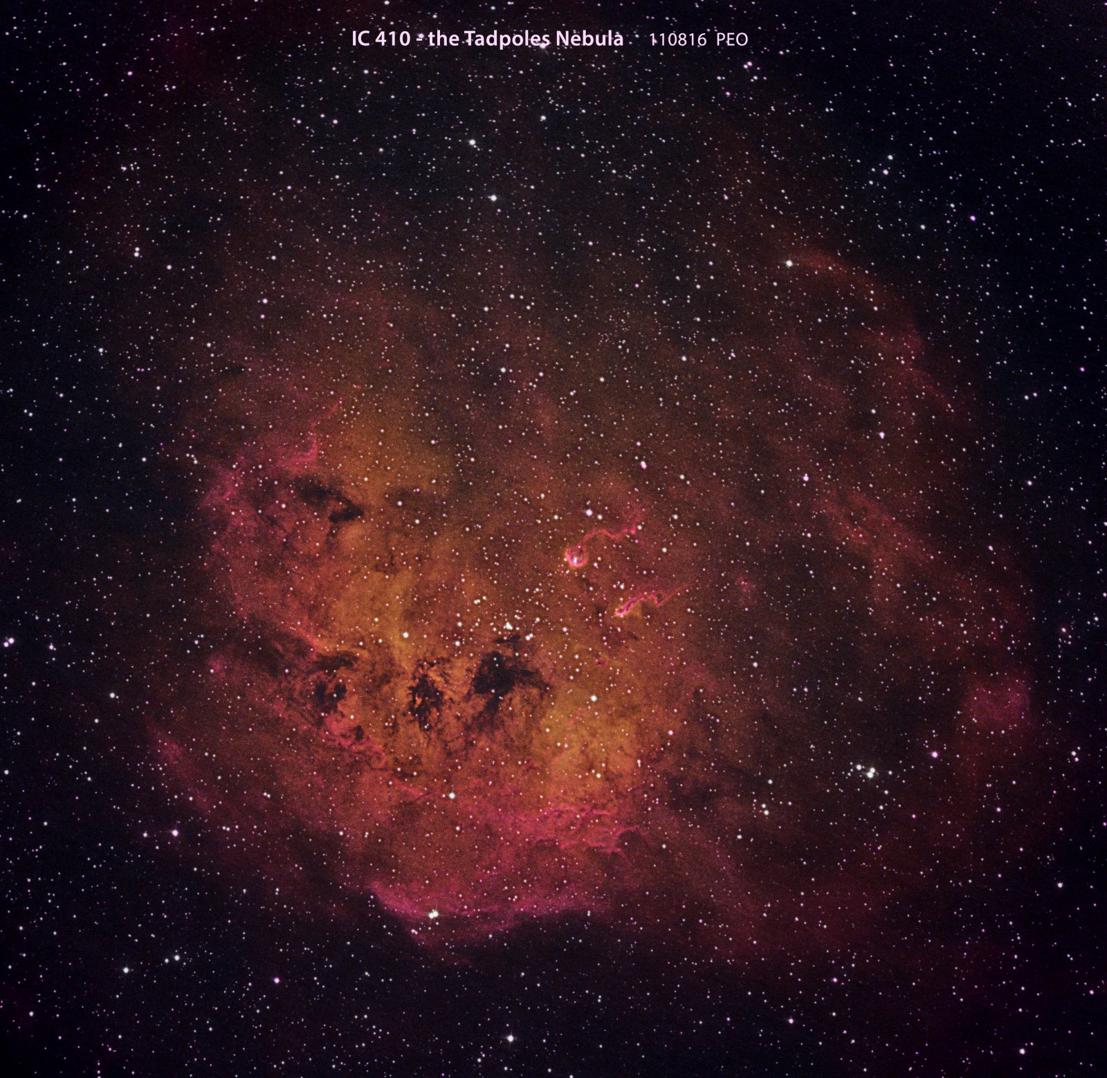 IC410, the Tadpoles Nebula